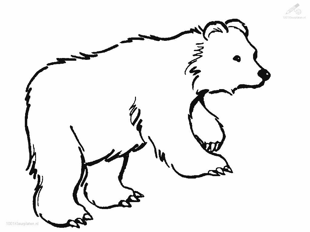 Ausmalbilder Zootiere: Free Coloring Pages Of Rainbow Teddy Bear