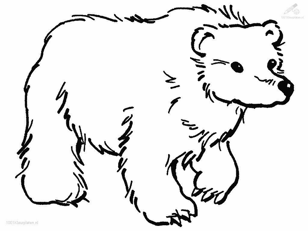 Bear Coloring Page Coloring Pages Of Bears