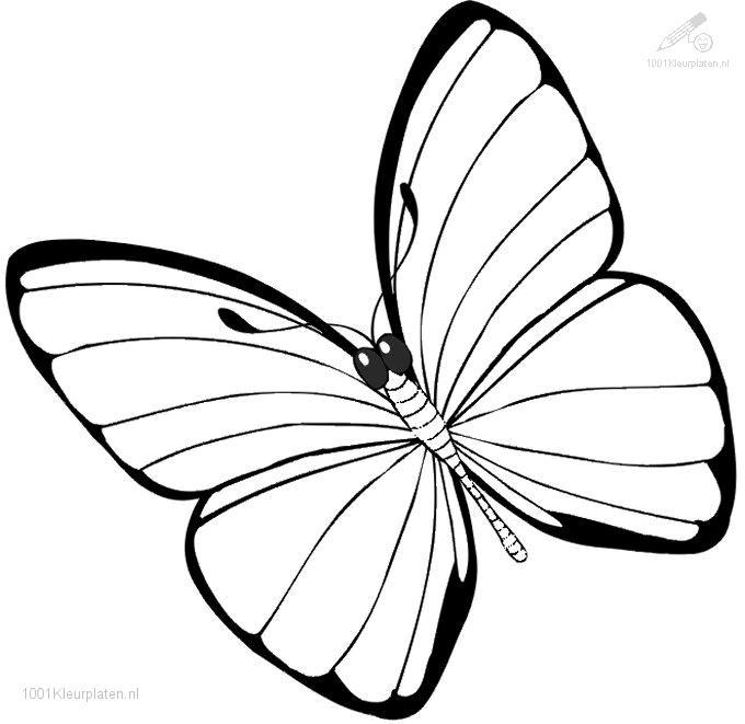 Coloringpage: butterfly-coloring-page-4