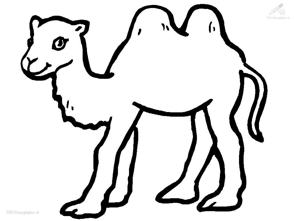 Animals gt gt camel gt gt camel coloring page