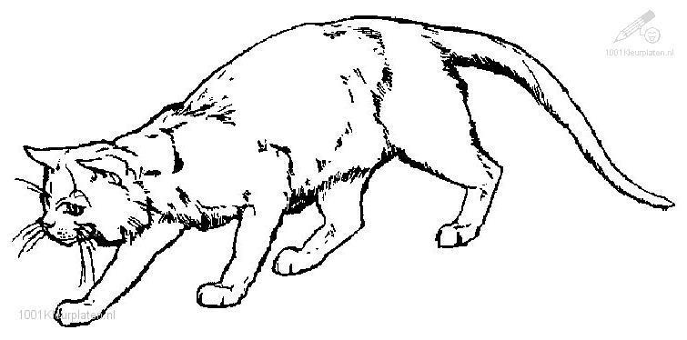 realistic cat coloring pages - katten kleurplaten