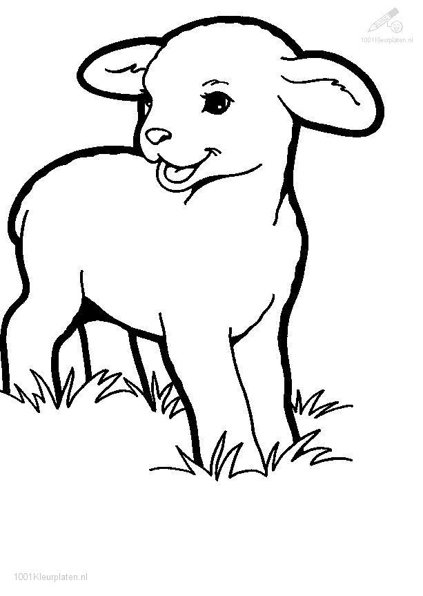 lamb colouring pages - Sheep Coloring Page
