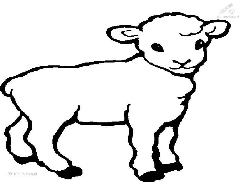 The gallery for coloring pages of sheep and lambs for Lamb coloring page