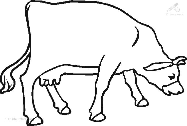 Coloringpage: cow-coloring-page-3