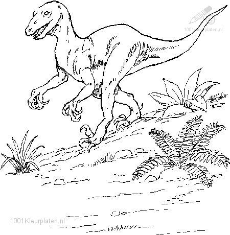 Dinosaur Coloring Pages on 1001 Coloringpages   Animals    Dinosaurs    Dinosaur Coloring Page