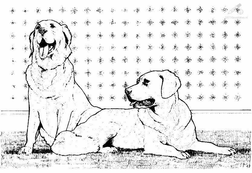Coloringpage: dog-coloring-page-1