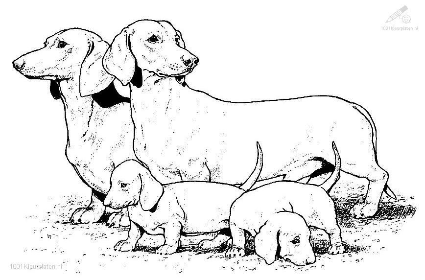 real dogs coloring pages - photo#20