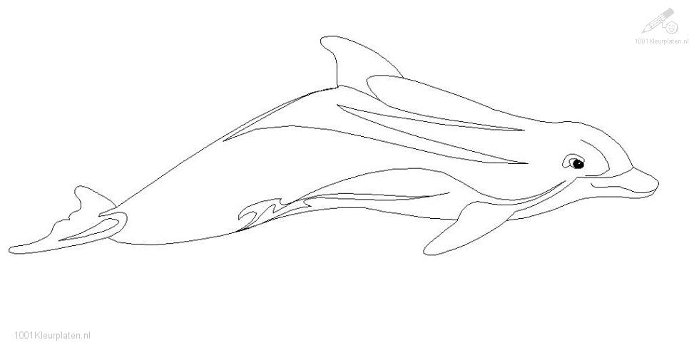 Dolphin Coloring page