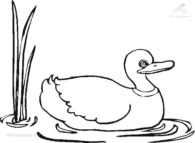 Coloringpage: duck-coloring-page-13