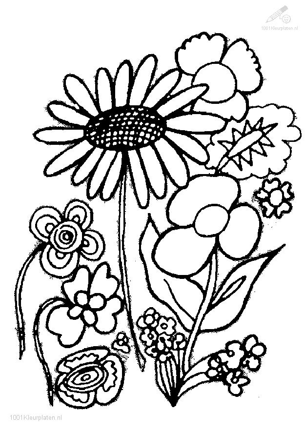 Plants gt gt flowers gt gt flower coloring page