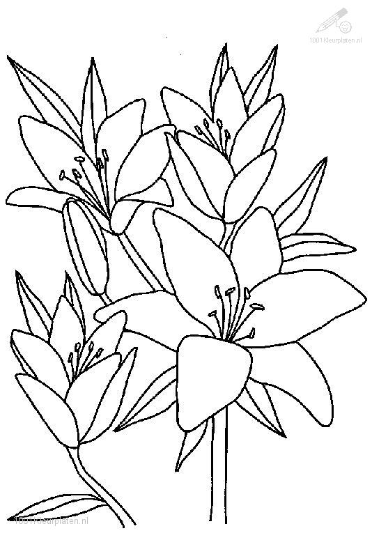 1001 Coloringpages Plants Flowers Flowers Coloring Page