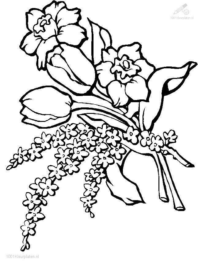 Plants    Flowers    Flowers Coloring Page