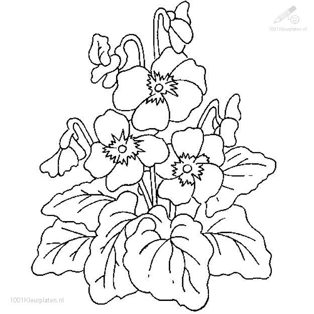 free plant coloring pages - photo#36