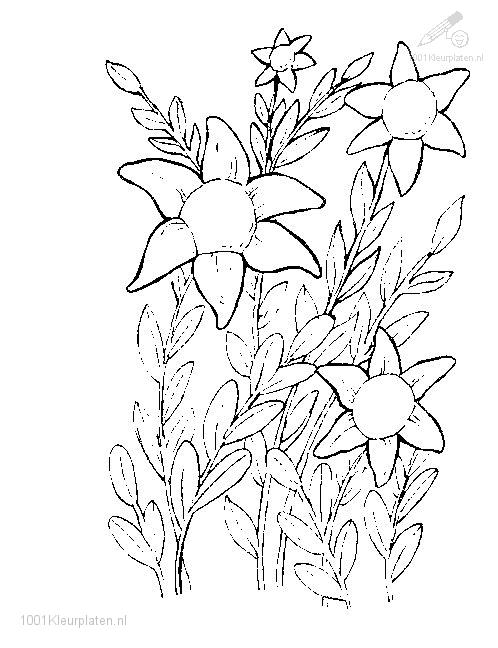 Coloringpage: flower-coloring-page-3
