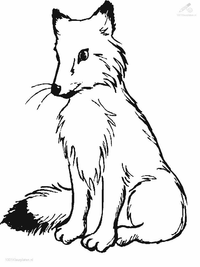 Fox A Colorier Coloring Pages Fox Coloring Page