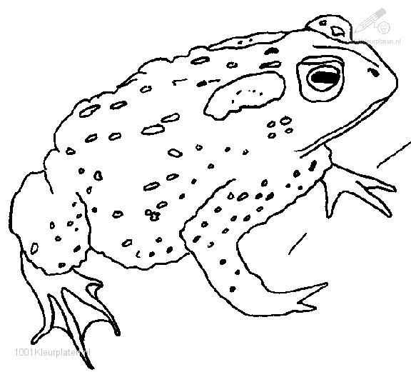 Frog Coloring Page Frog And Toad Coloring Pages