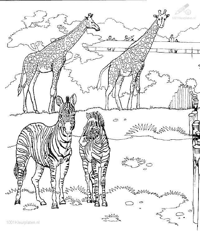 Giraffe Coloring Page