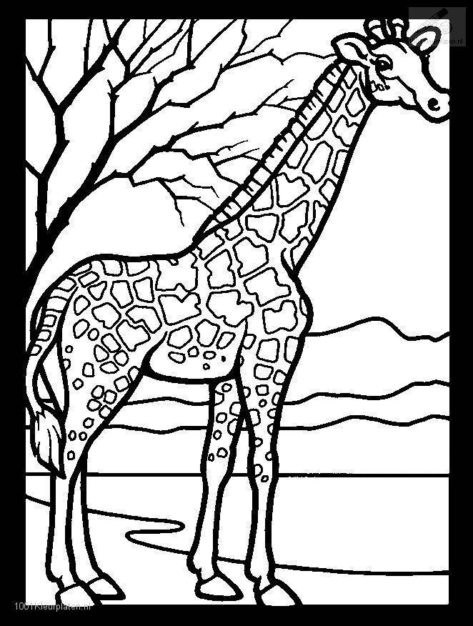 Coloringpage: giraffe-coloring-page-3