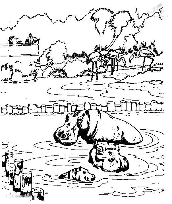 Hippo Coloring Page