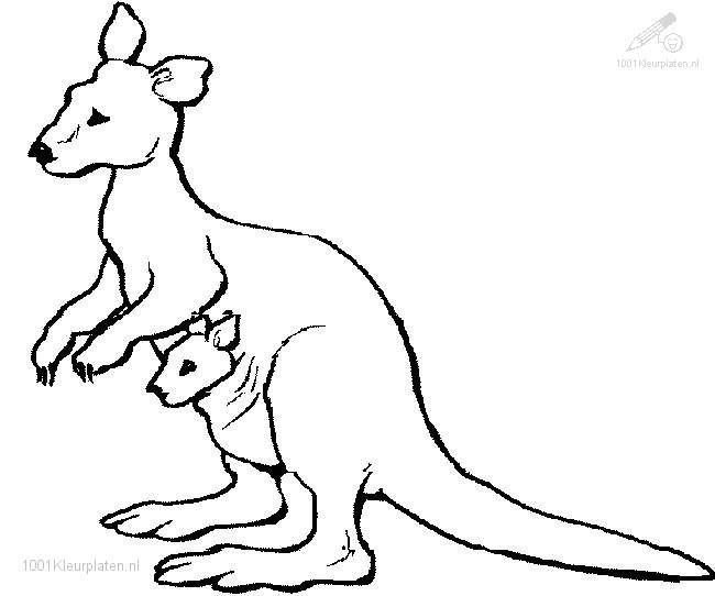 k for kangaroo coloring pages - photo#41