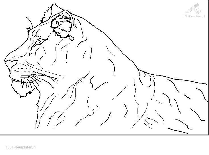 Coloringpage: lion-coloring-page-10