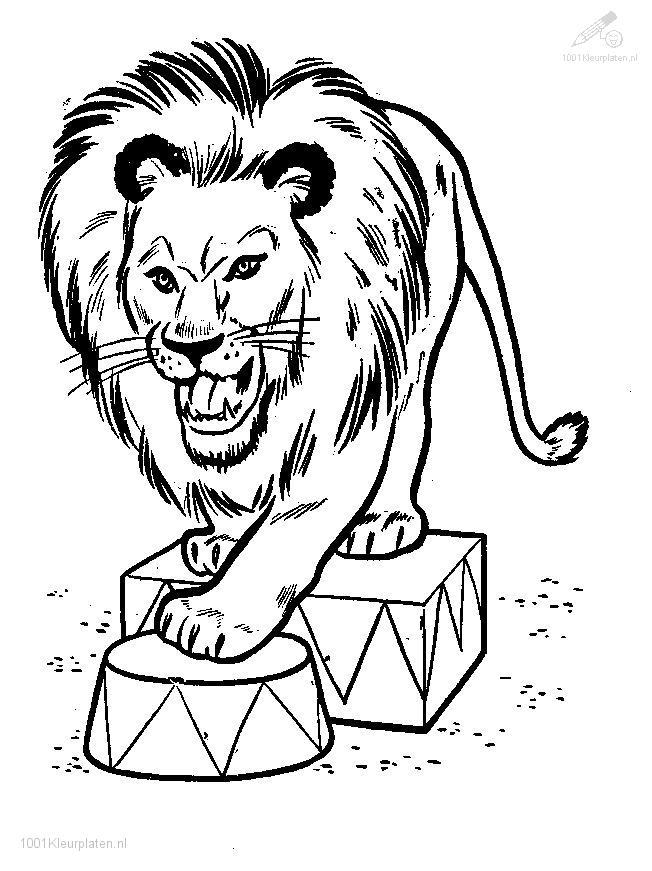 Coloringpage: lion-coloring-page-11