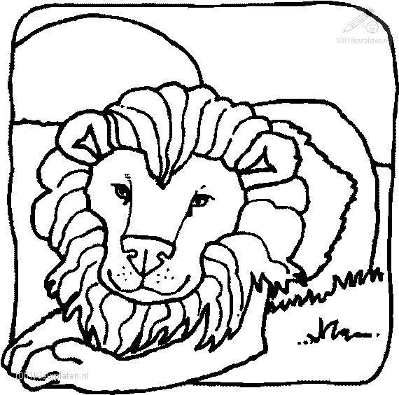 Coloringpage: lion-coloring-page-4