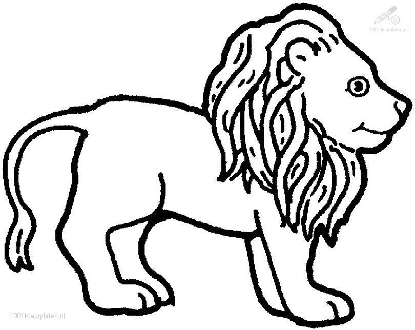 Coloringpage: lion-coloring-page-7