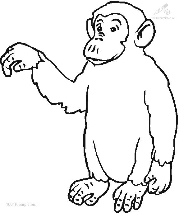 Little Monkey Coloring Page