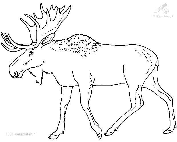 Coloringpage: moose-coloring-page-1