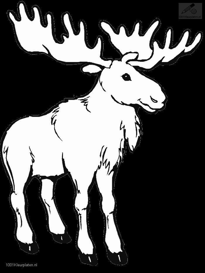 Coloringpage: moose-coloring-page-2