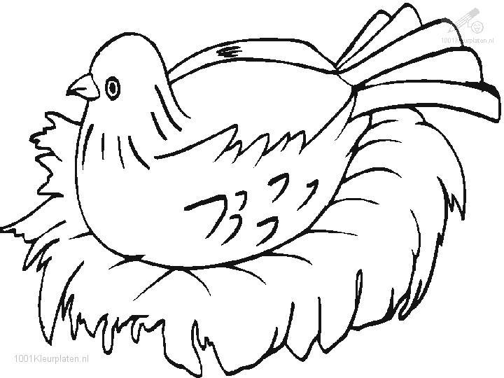 Nesting Bird Coloring Page
