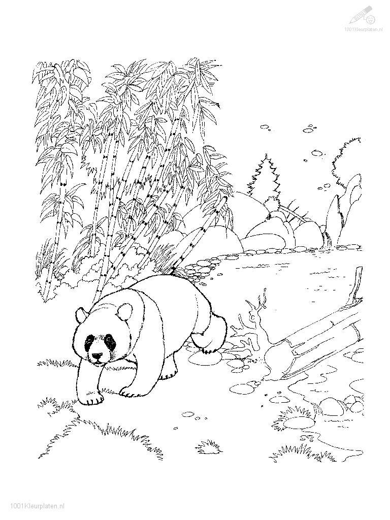 Free cute red pandas coloring pages