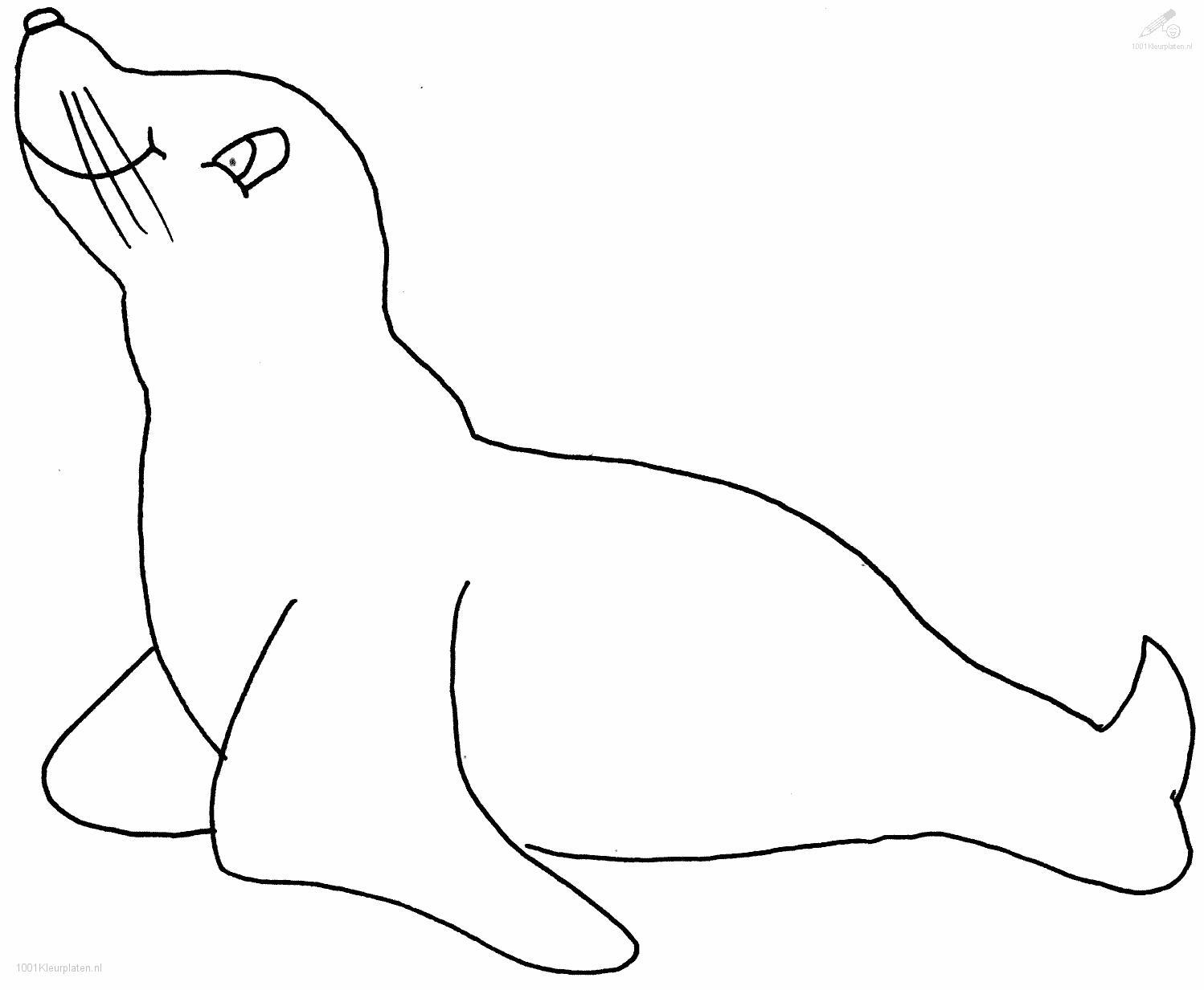 Sealion Coloring Page