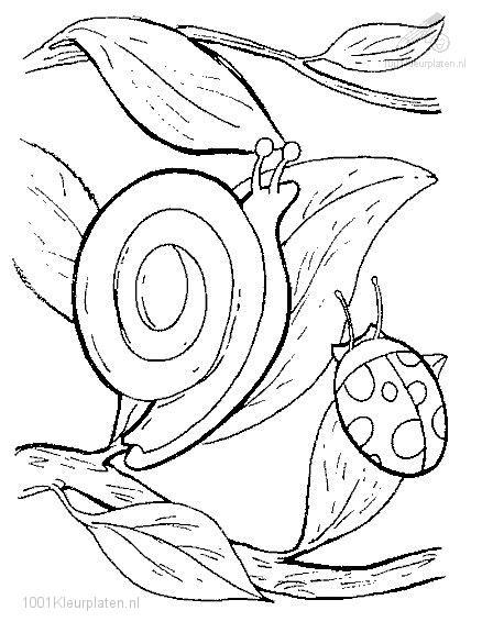 Coloringpage: snail-coloring-page-5