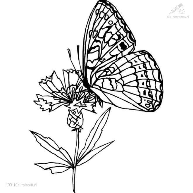 http://www.1001coloringpages.com/coloringpages/full/spring-coloring-page-15.jpg