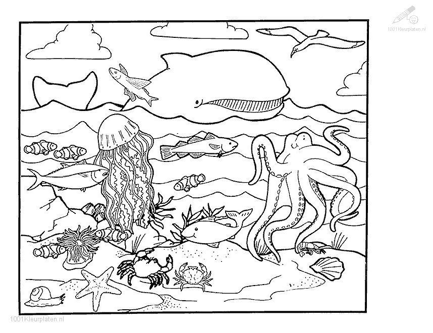 Squid Free Coloring Pages
