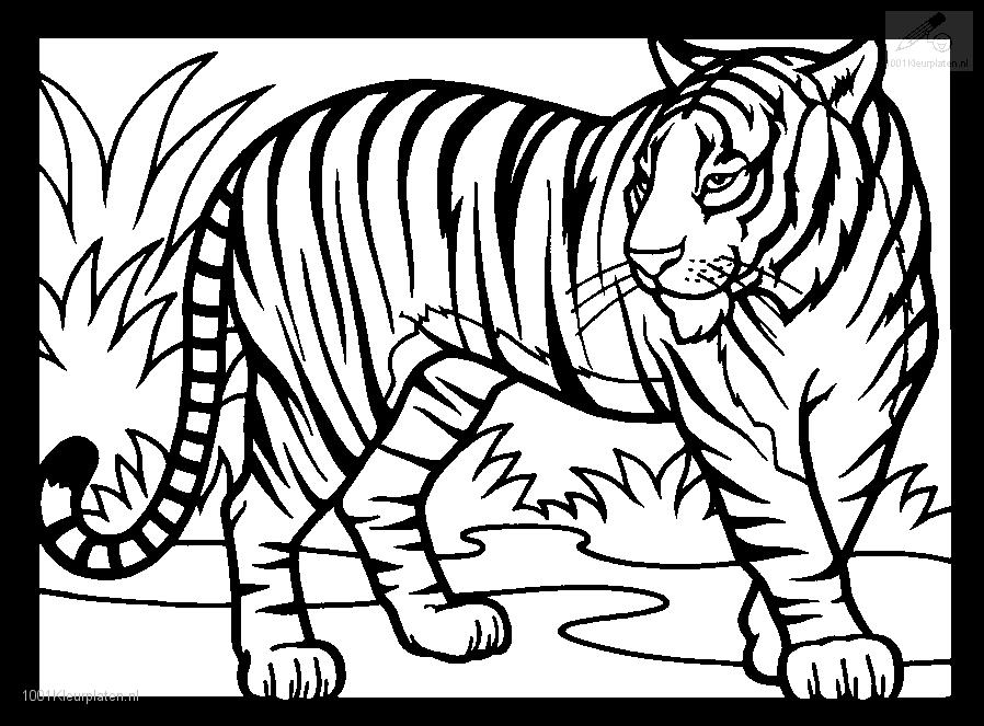 Animal Colouring Pages Tiger Coloring animal heads tiger head