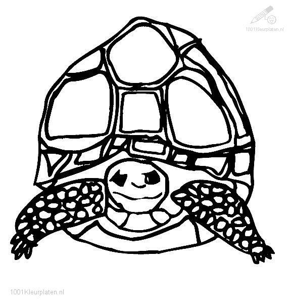Coloringpage: turtle-coloring-page-5
