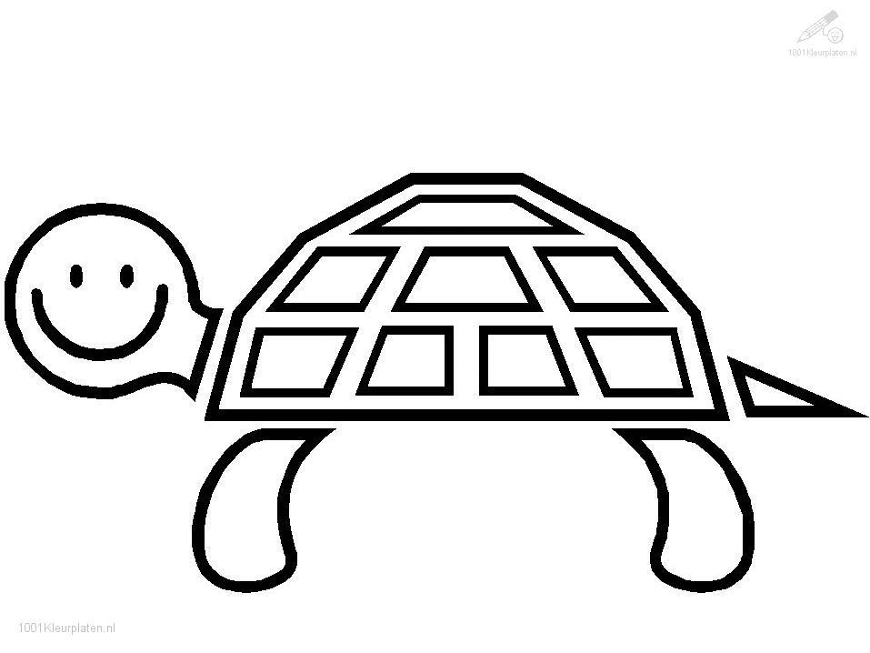 animals turtle turtle coloring page