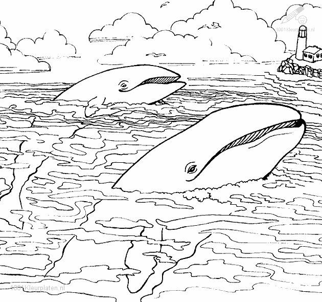 Coloringpage: whale-coloring-page-3