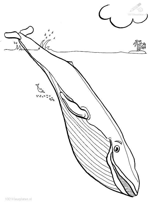 Coloringpage: whale-coloring-page-8