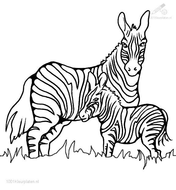 Free Zebra Print A Coloring Pages