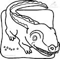 Crocodile Coloring Page>> Crocodile Coloring Page