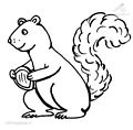 Squirrel Coloring Page>> Squirrel Coloring Page