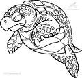 Turtle Coloring Page>> Turtle Coloring Page